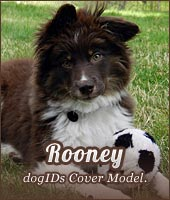 dogIDs Cover Model: Rooney.